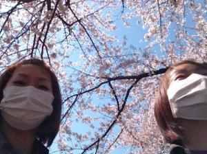 館林の桜③_convert_20140408235707