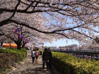 館林の桜④_convert_20140408235736