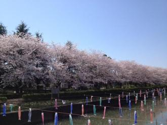 館林の桜⑦_convert_20140408235856