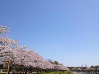 館林の桜⑥_convert_20140408235831