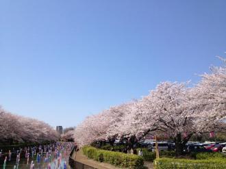 館林の桜⑧_convert_20140408235929