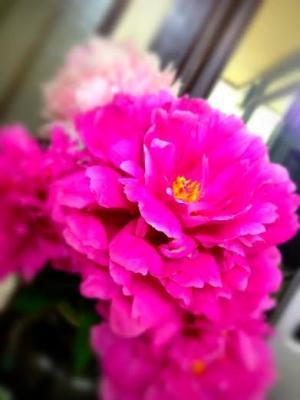 お花①_convert_20140522165747