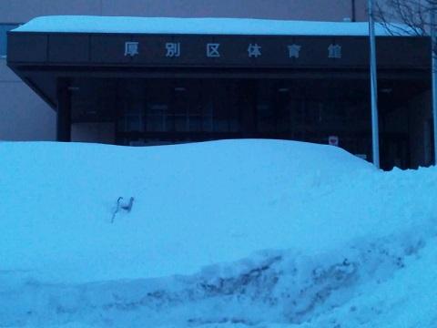20140416用・雪で階段が見えない