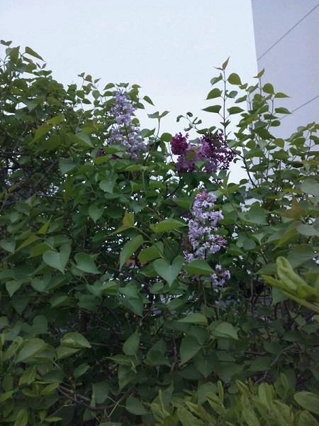 20140523用・こ、この花は…!