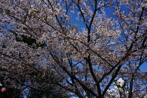 fc2_2014-04-12_17-32-27-130.jpg