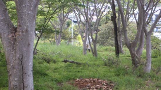 s-DSCF0614.jpg
