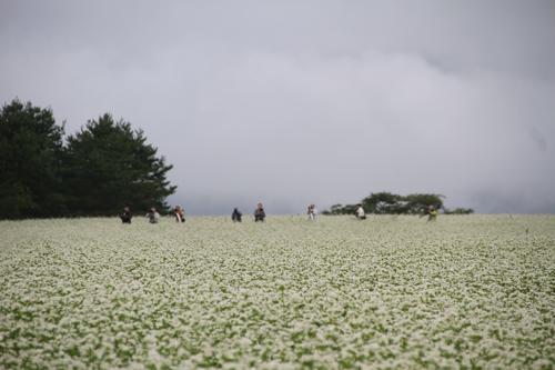 猿楽台地そば畑2014 9 3007
