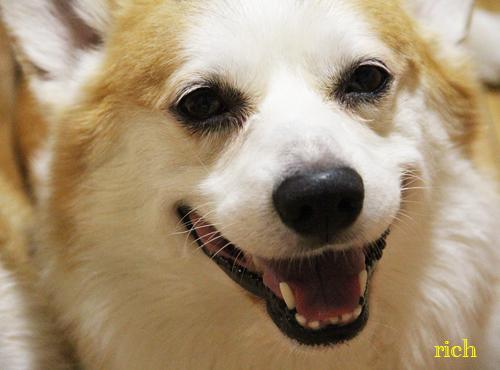 リッチの笑顔