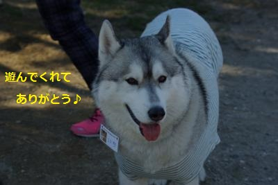IMGP6300_convert_20140323200445.jpg