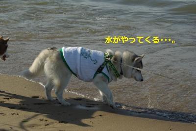 IMGP6406_convert_20140505194541.jpg