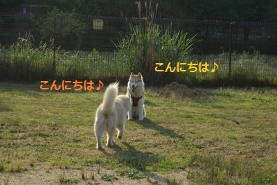 IMGP6666_convert_20140605141713.jpg