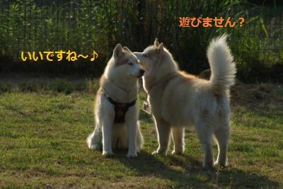 IMGP6668_convert_20140605141959.jpg