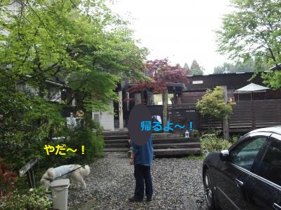 P5059404_convert_20140505212352.jpg