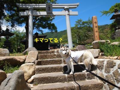 P5189695_convert_20140602133337.jpg