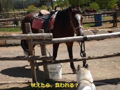 P5189749_convert_20140602150612.jpg