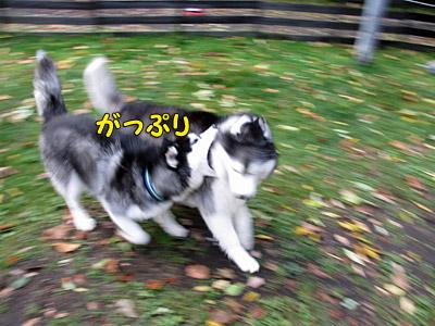 軽井沢3日目
