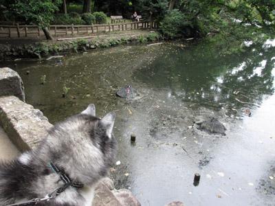 淀んだお池