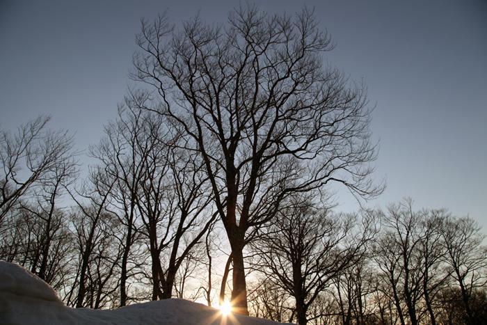 2014年4月12日 朝日が昇るブナ林