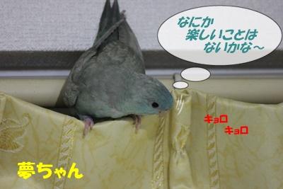 IMG260216-2.jpg
