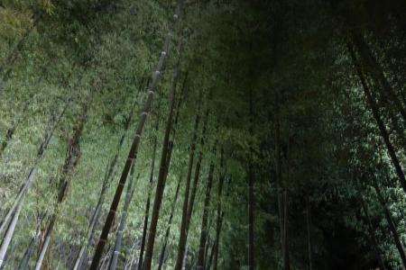竹ふえ29
