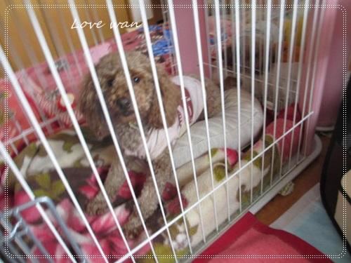 mini2IMG_4175.jpg