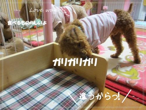 mini2IMG_5163.jpg