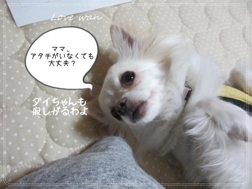 mini2IMG_5828.jpg