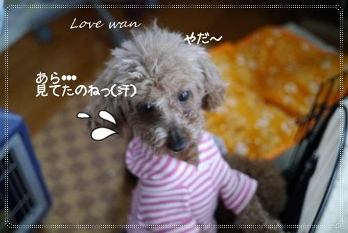 mini2P1300317.jpg