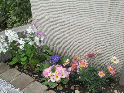 花壇に咲く