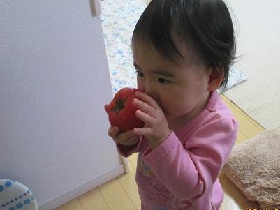 トマトとトマト鑑賞