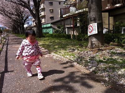 桜並木をてくてく。