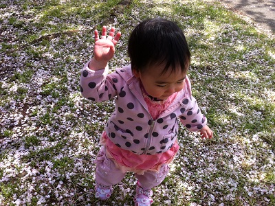 桜の絨毯を