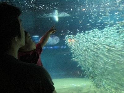 お魚の群れ