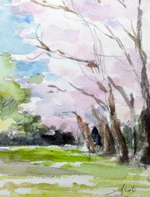 2014赤塚公園の桜