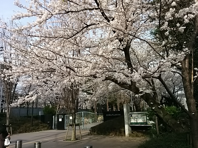 戸山・桜2014,3,31