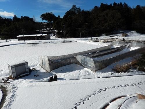 2014.2.14 2回目の大雪(ハウス崩壊) 015 (1)