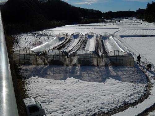 2014.2.14 2回目の大雪(ハウス崩壊) 015