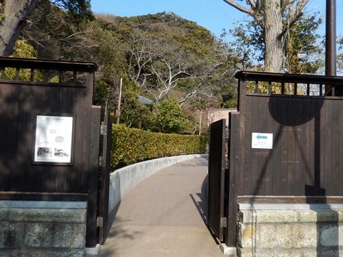 2014.3.9 鎌倉小町通り (鎌足桜) 050 (5)