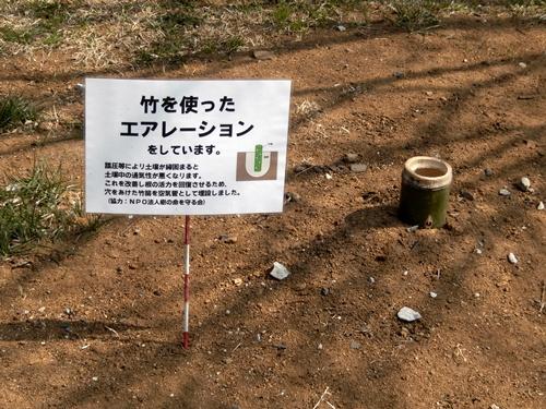 2014.3.12 青葉の森公園 (鎌足桜) 041 (17)