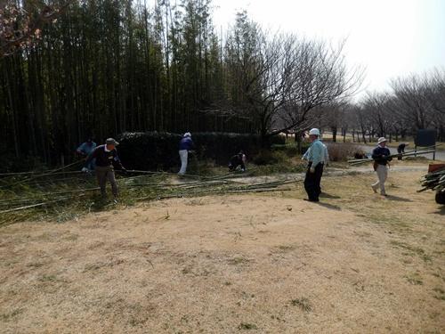 2014.3.12 青葉の森公園 (鎌足桜) 041 (20)