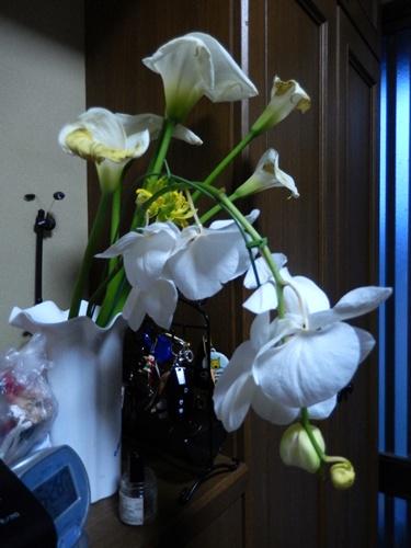 2014.3.30 花 (胡蝶蘭) 002 (1)