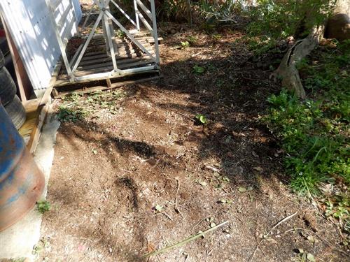 2014.4.4 庭の草取り (自宅) 013 (1)
