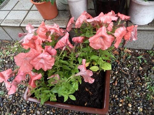 2014.5.21 春の雨 001 (11)