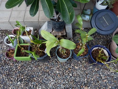 2014.9.3多肉植物 008 (1)