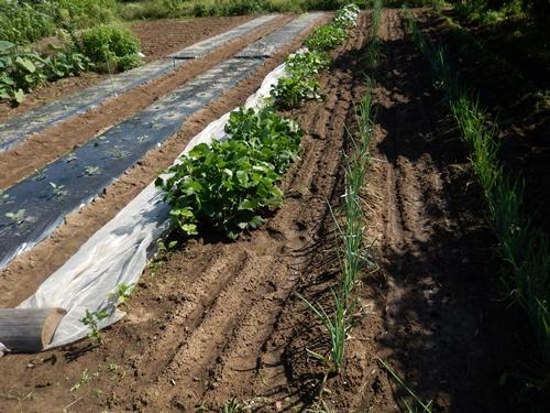 2014.9.20 秋野菜 021
