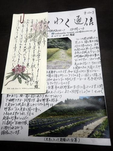 2014.9.24 秋猪花 058 (3)