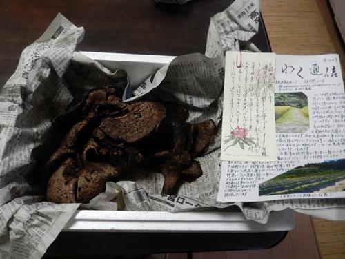 2014.9.24 秋猪花 058 (1)