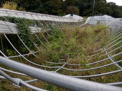 2014.10.7 台風の通過した畑 001 (20)