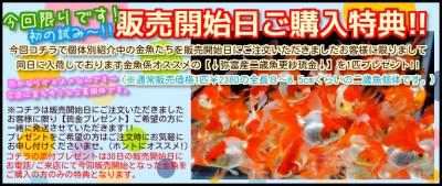 2014年8月29日ブログ (1)