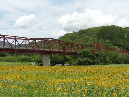 大洲・五郎河原 ヒマワリ 6
